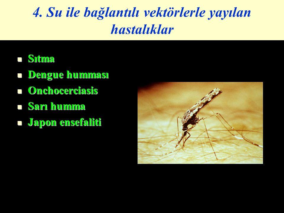 4. Su ile bağlantılı vektörlerle yayılan hastalıklar