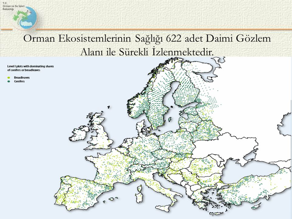 Orman Ekosistemlerinin Sağlığı 622 adet Daimi Gözlem Alanı ile Sürekli İzlenmektedir.