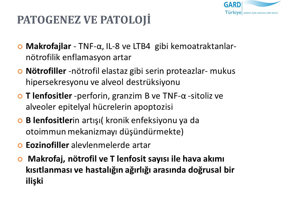 PATOGENEZ VE PATOLOJİ Makrofajlar - TNF-α, IL-8 ve LTB4 gibi kemoatraktanlar- nötrofilik enflamasyon artar.