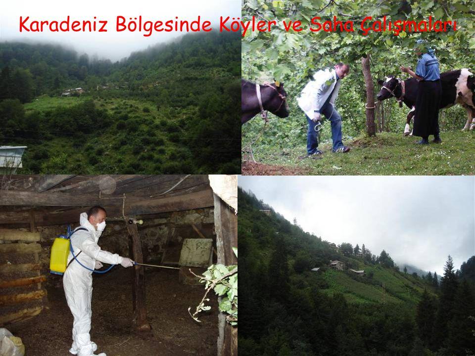 Karadeniz Bölgesinde Köyler ve Saha Çalışmaları