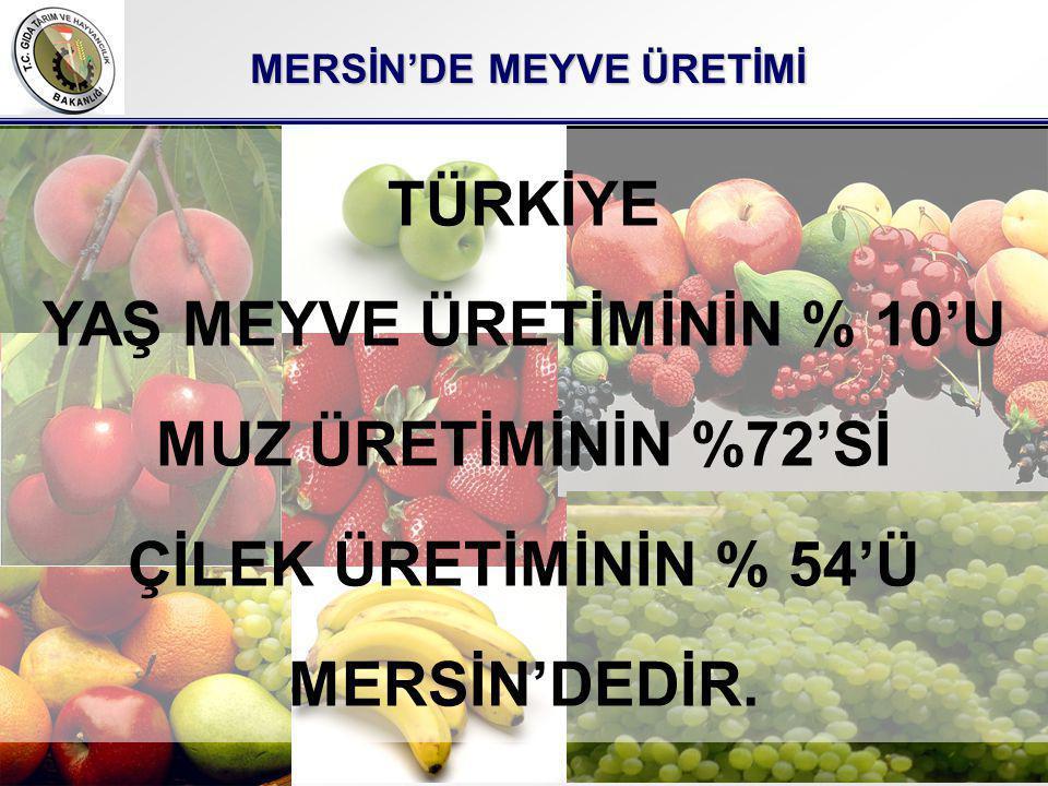 MERSİN'DE MEYVE ÜRETİMİ YAŞ MEYVE ÜRETİMİNİN % 10'U