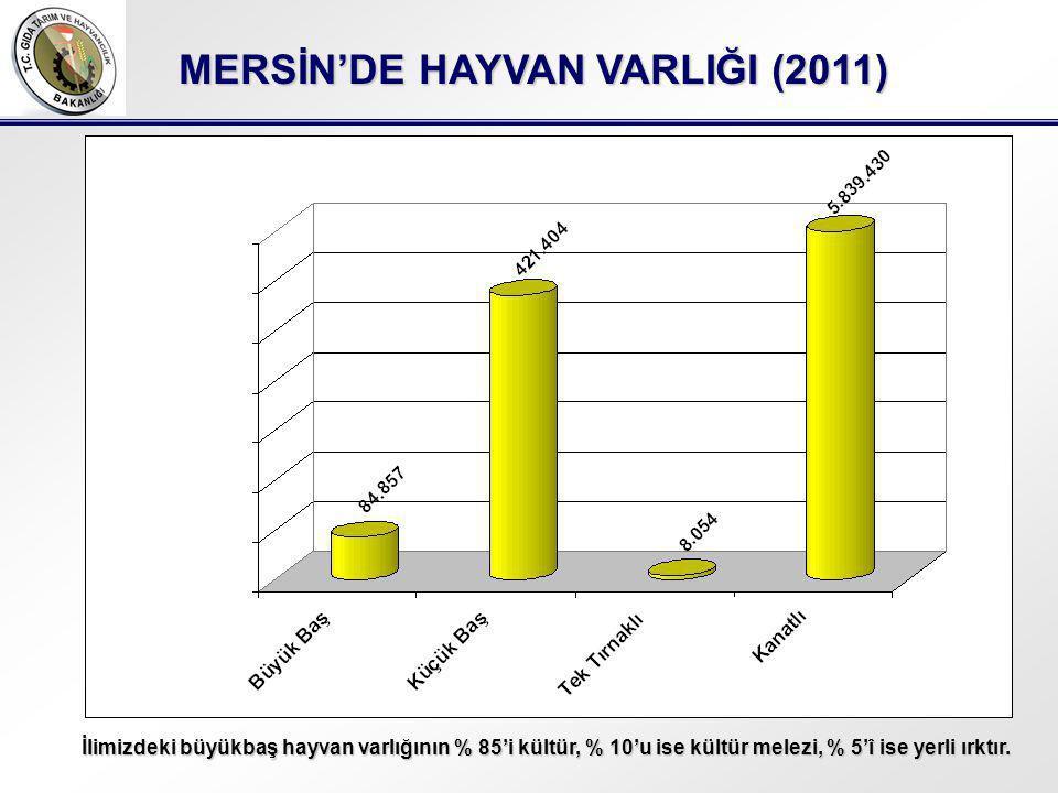 MERSİN'DE HAYVAN VARLIĞI (2011)