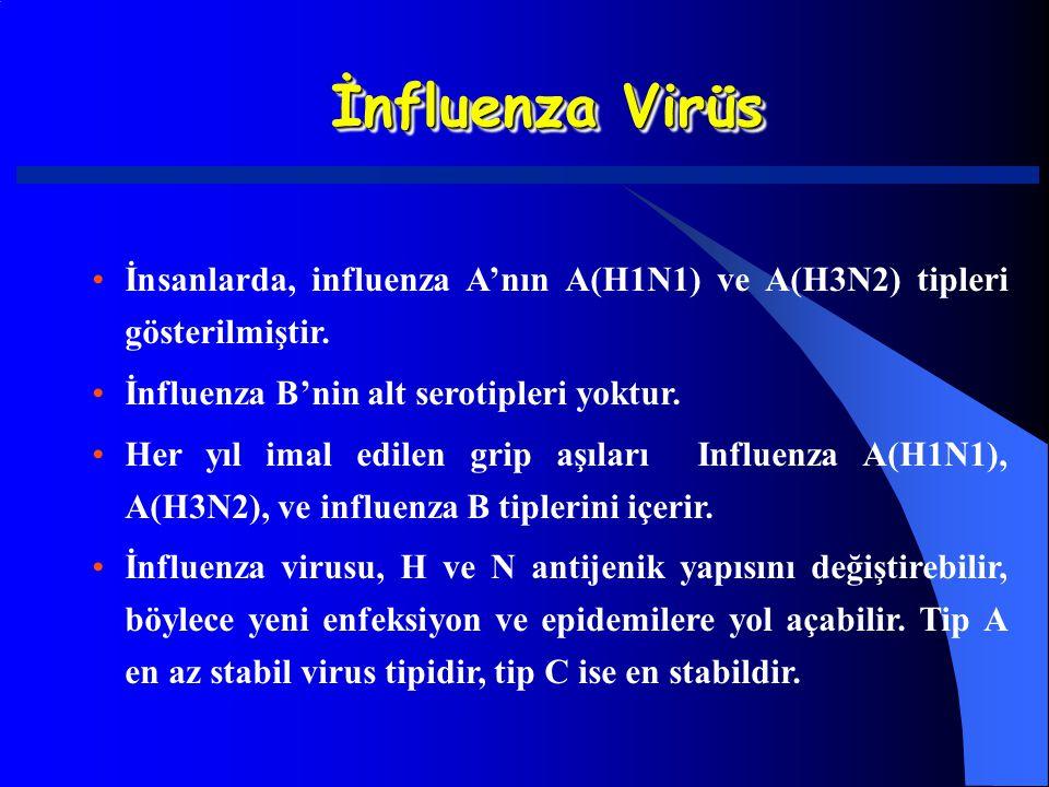 İnfluenza Virüs İnsanlarda, influenza A'nın A(H1N1) ve A(H3N2) tipleri gösterilmiştir. İnfluenza B'nin alt serotipleri yoktur.
