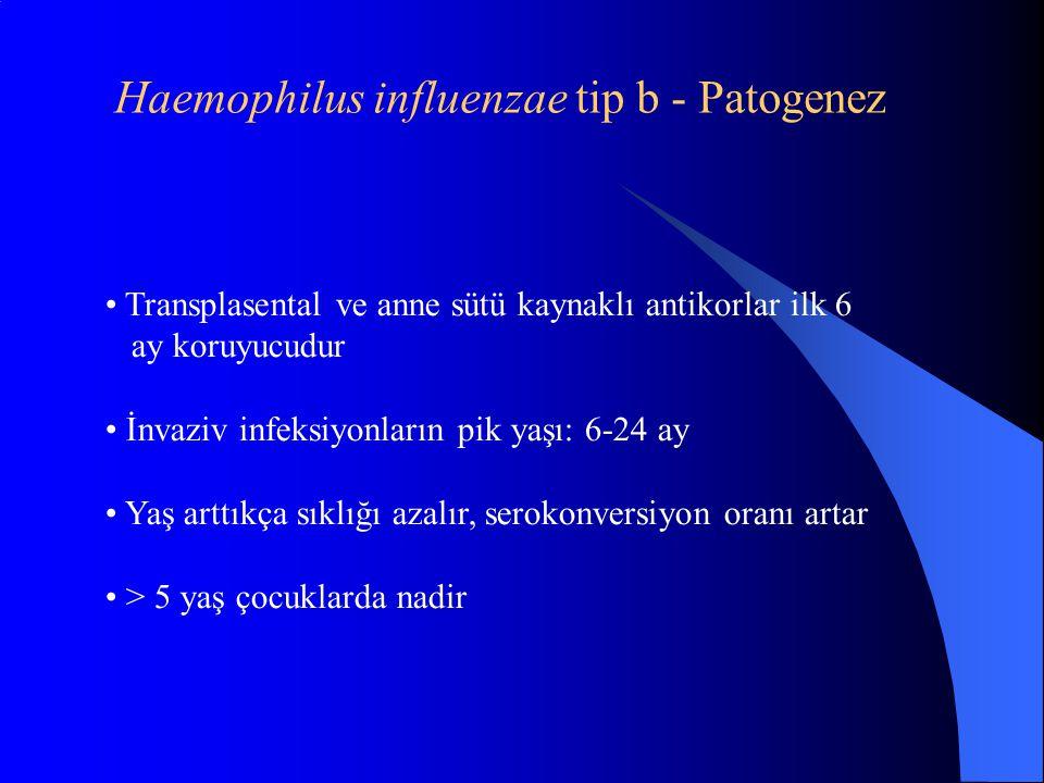 Haemophilus influenzae tip b - Patogenez