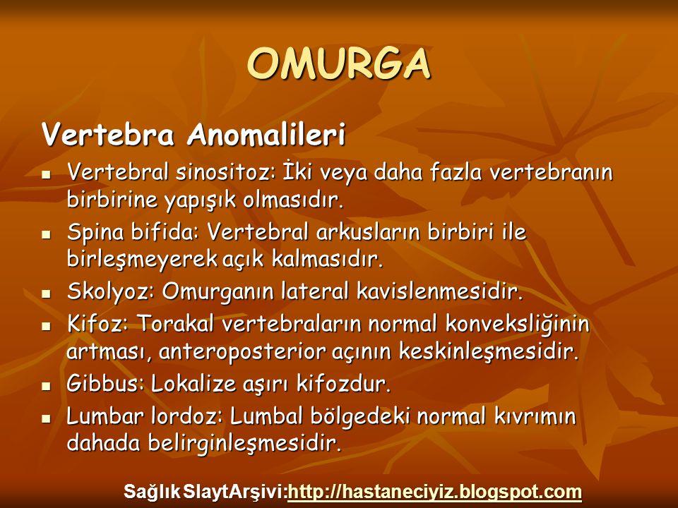 OMURGA Vertebra Anomalileri