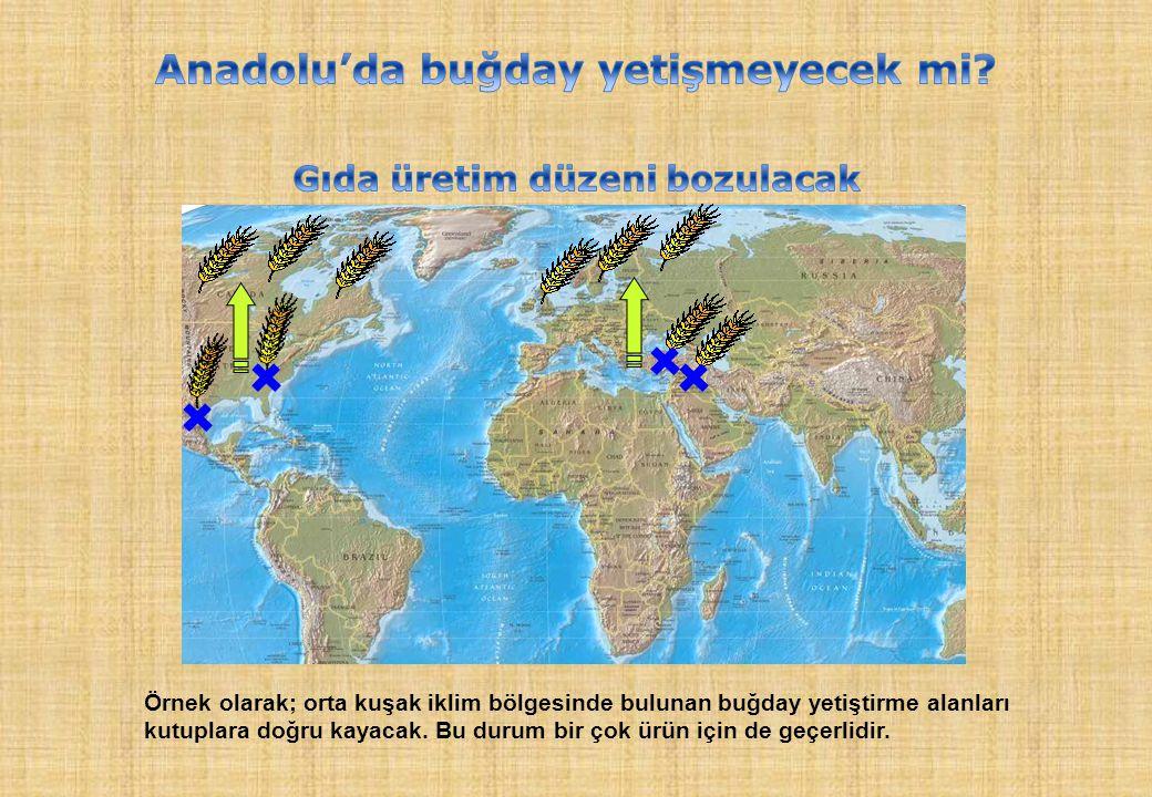 Anadolu'da buğday yetişmeyecek mi