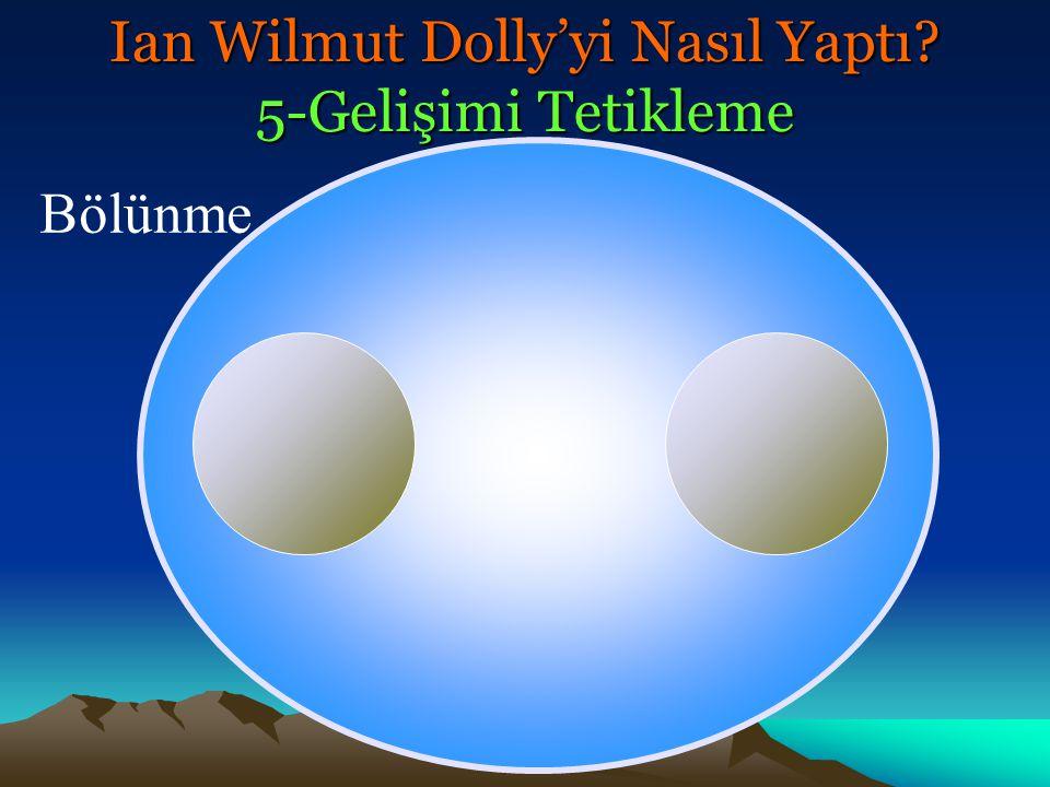 Ian Wilmut Dolly'yi Nasıl Yaptı 5-Gelişimi Tetikleme