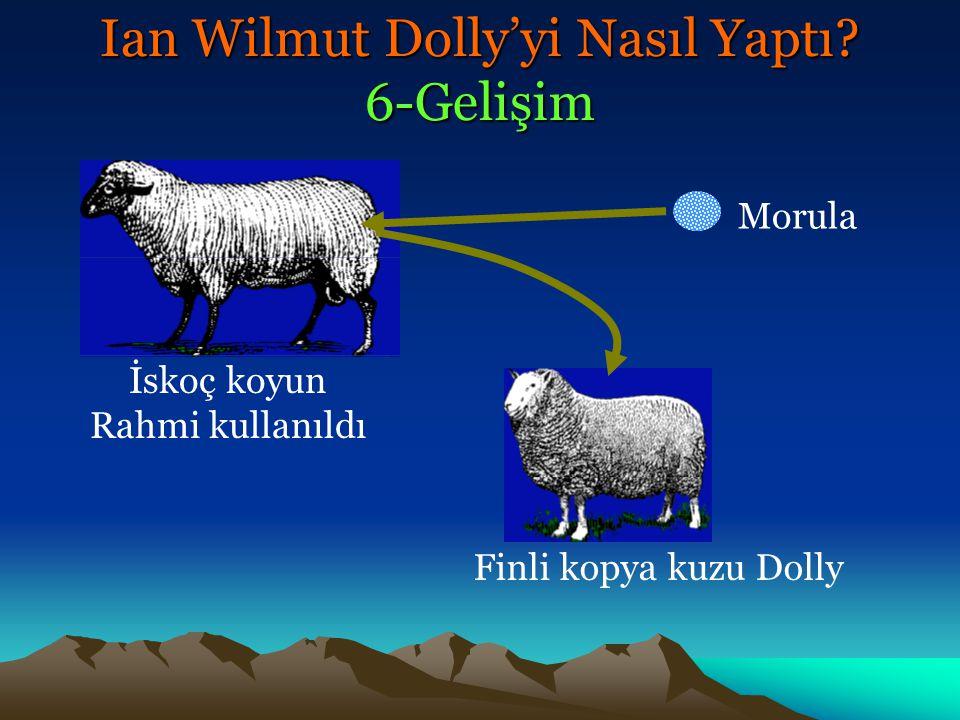Ian Wilmut Dolly'yi Nasıl Yaptı 6-Gelişim