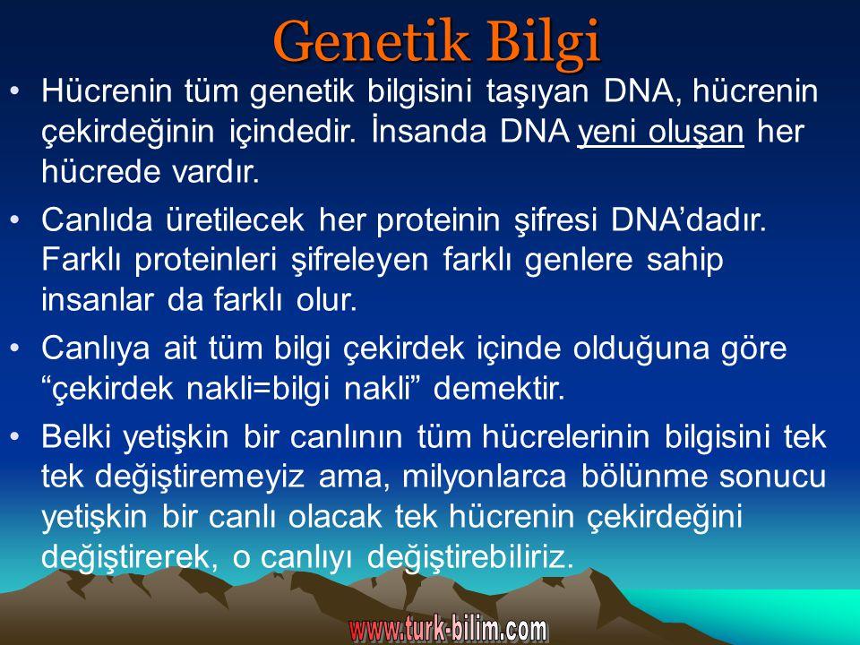 Genetik Bilgi Hücrenin tüm genetik bilgisini taşıyan DNA, hücrenin çekirdeğinin içindedir. İnsanda DNA yeni oluşan her hücrede vardır.