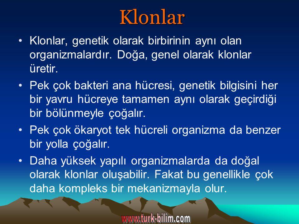 Klonlar Klonlar, genetik olarak birbirinin aynı olan organizmalardır. Doğa, genel olarak klonlar üretir.