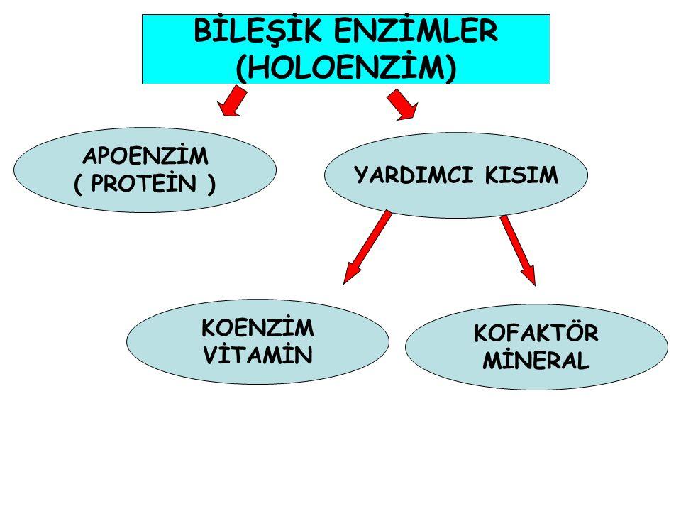 BİLEŞİK ENZİMLER (HOLOENZİM)