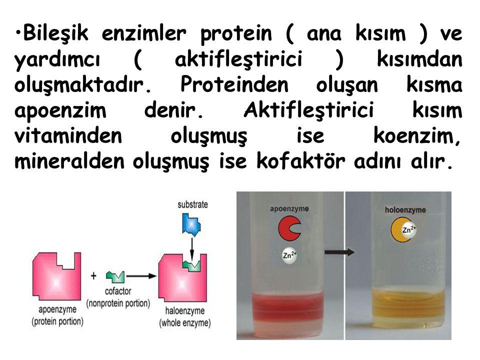 Bileşik enzimler protein ( ana kısım ) ve yardımcı ( aktifleştirici ) kısımdan oluşmaktadır.