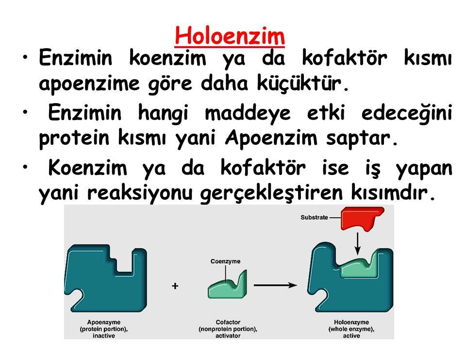 Holoenzim Enzimin koenzim ya da kofaktör kısmı apoenzime göre daha küçüktür.