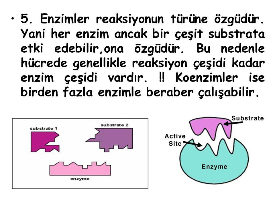 5. Enzimler reaksiyonun türüne özgüdür