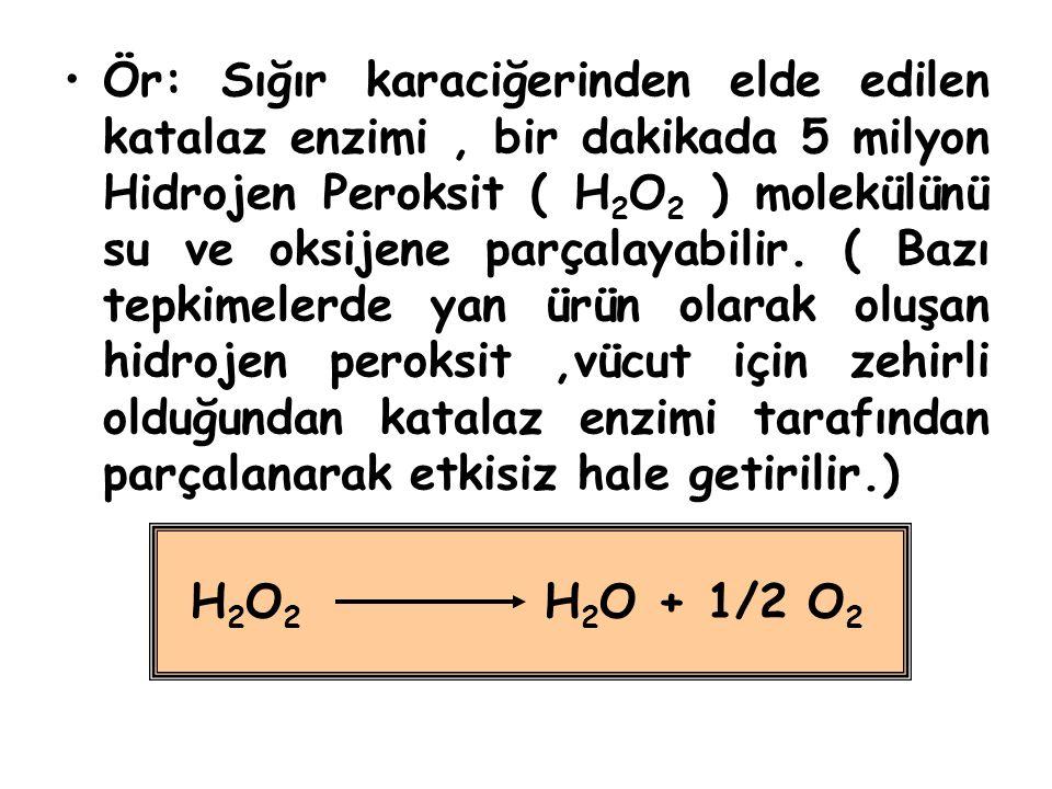 Ör: Sığır karaciğerinden elde edilen katalaz enzimi , bir dakikada 5 milyon Hidrojen Peroksit ( H2O2 ) molekülünü su ve oksijene parçalayabilir. ( Bazı tepkimelerde yan ürün olarak oluşan hidrojen peroksit ,vücut için zehirli olduğundan katalaz enzimi tarafından parçalanarak etkisiz hale getirilir.)