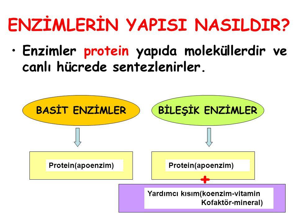 ENZİMLERİN YAPISI NASILDIR