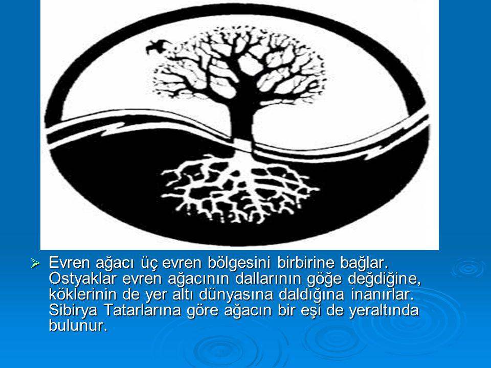 Evren ağacı üç evren bölgesini birbirine bağlar