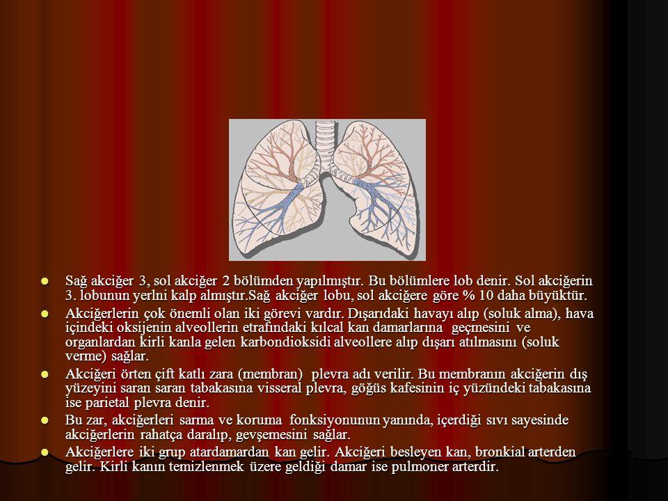 Sağ akciğer 3, sol akciğer 2 bölümden yapılmıştır