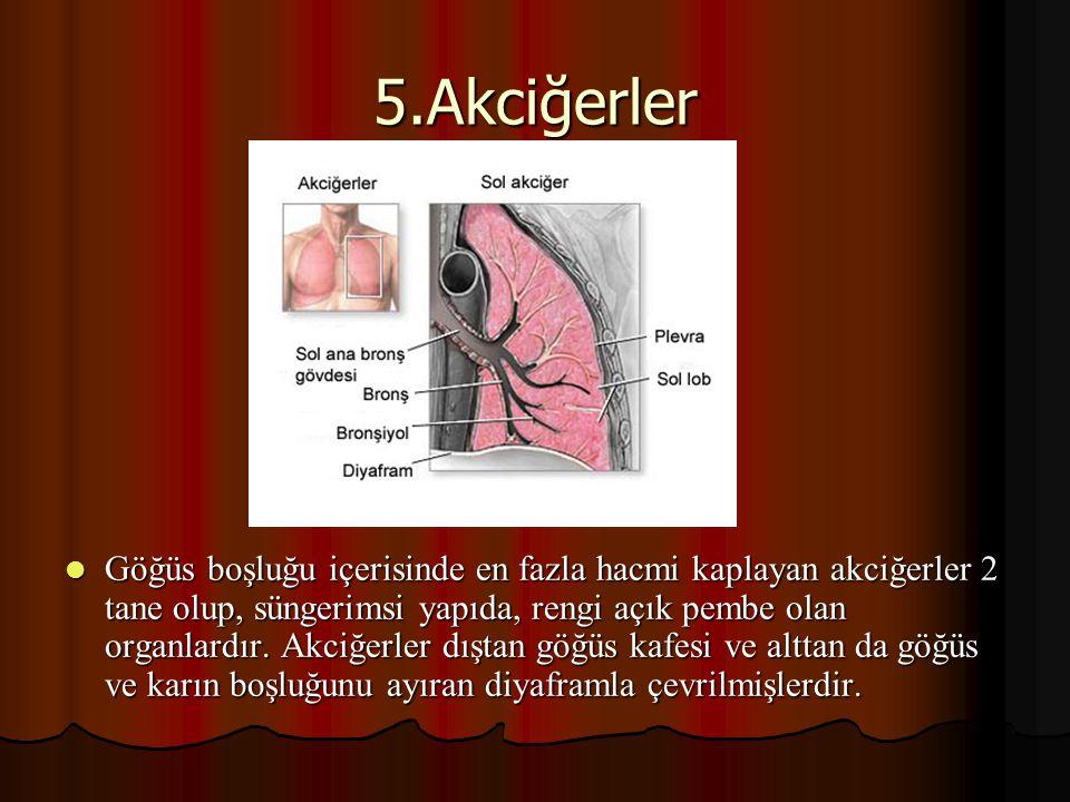 5.Akciğerler