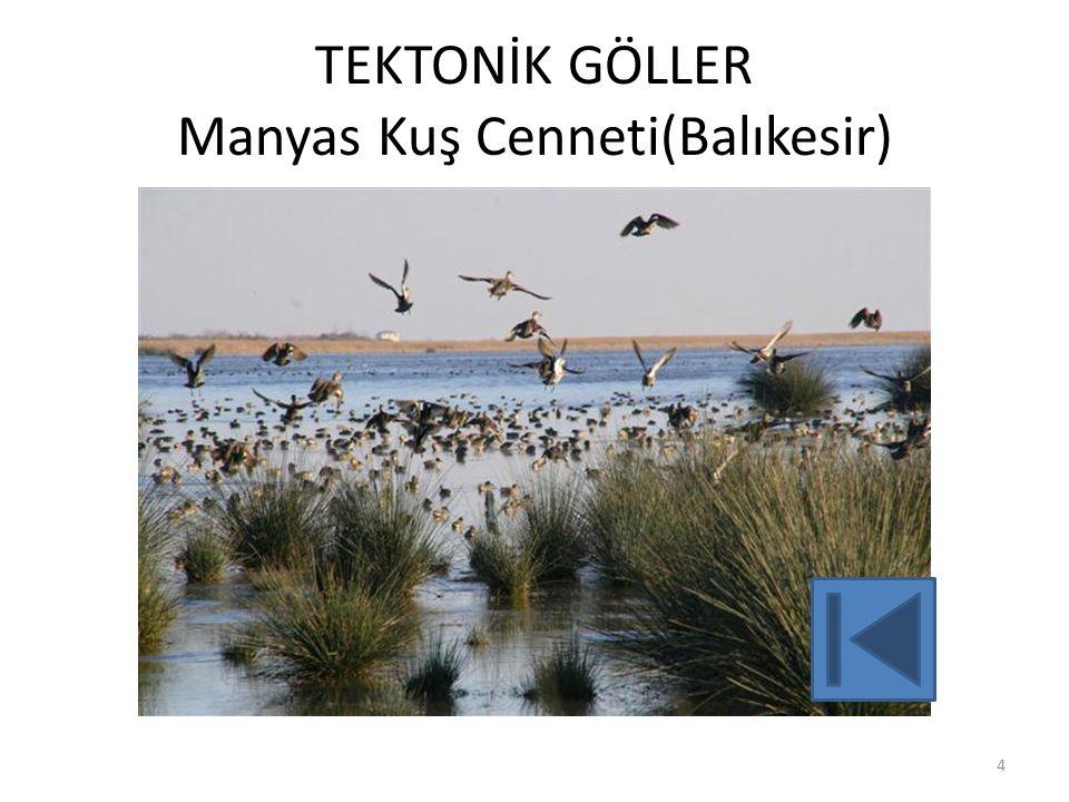 TEKTONİK GÖLLER Manyas Kuş Cenneti(Balıkesir)