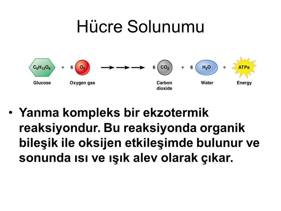 Hücre Solunumu