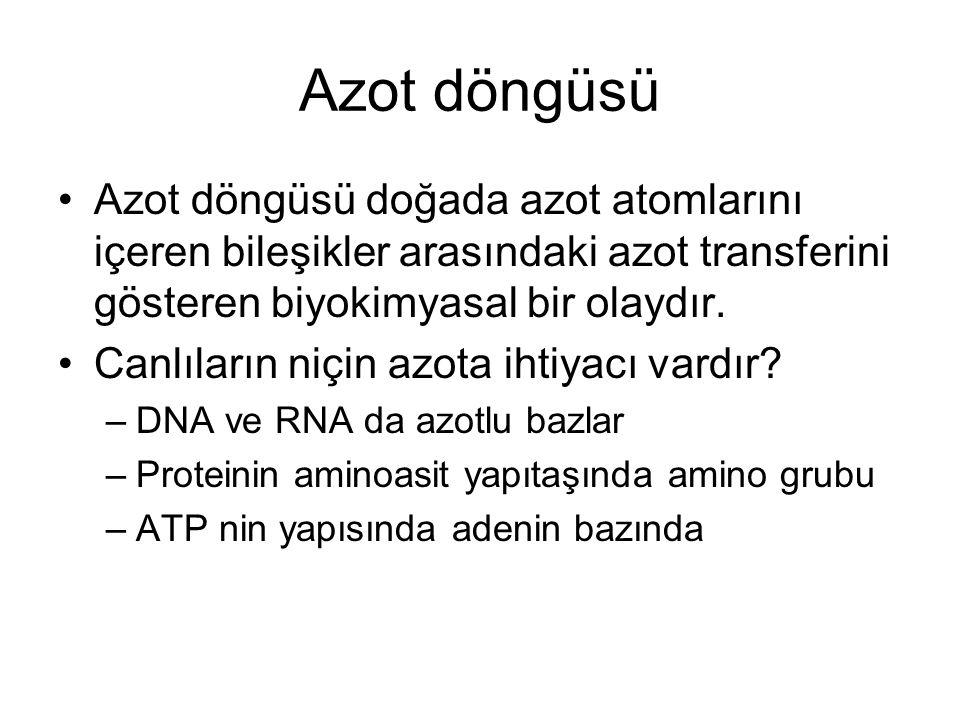 Azot döngüsü Azot döngüsü doğada azot atomlarını içeren bileşikler arasındaki azot transferini gösteren biyokimyasal bir olaydır.