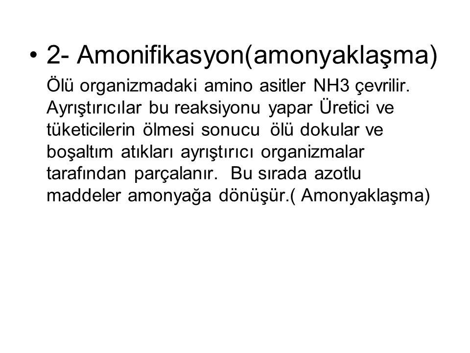 2- Amonifikasyon(amonyaklaşma)