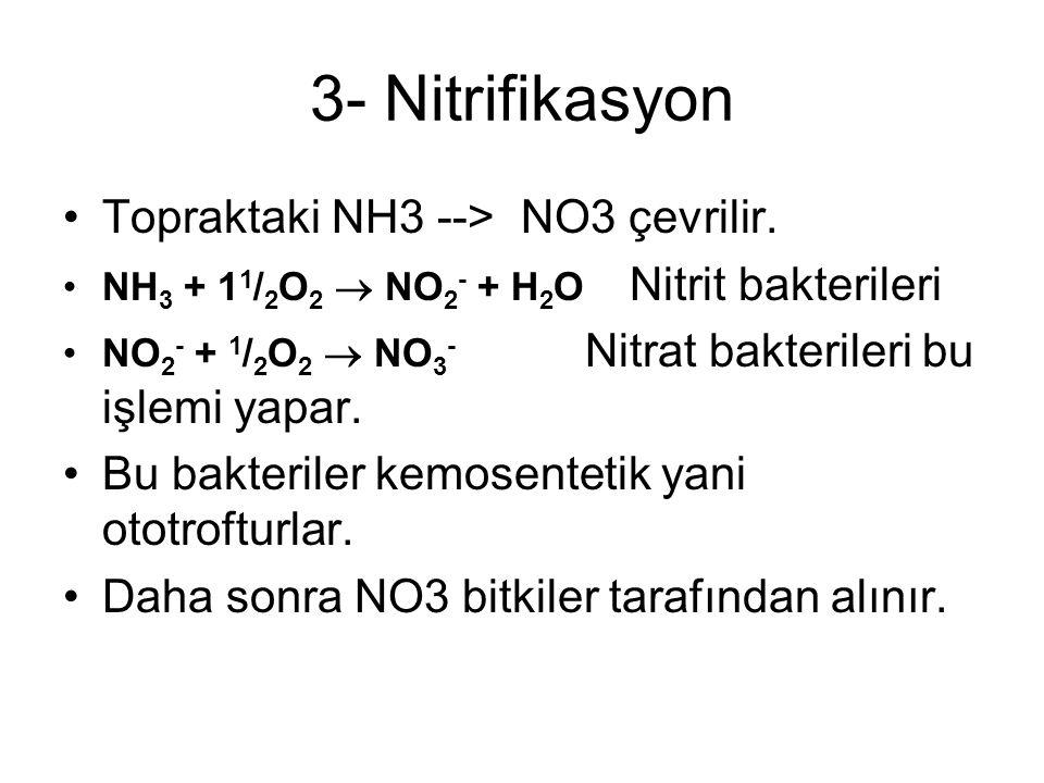 3- Nitrifikasyon Topraktaki NH3 --> NO3 çevrilir.