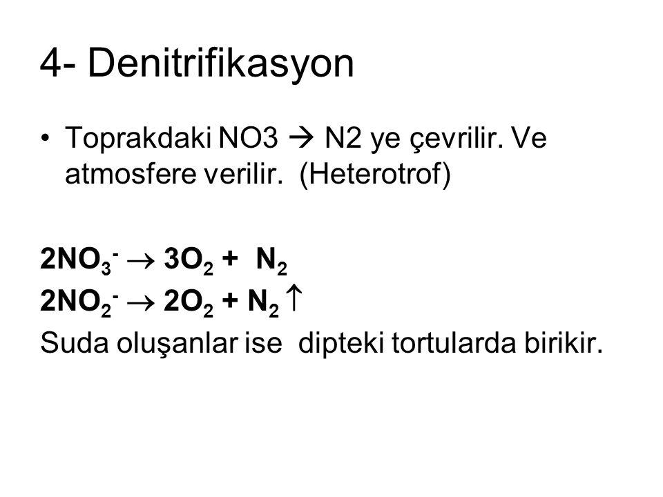 4- Denitrifikasyon Toprakdaki NO3  N2 ye çevrilir. Ve atmosfere verilir. (Heterotrof) 2NO3-  3O2 + N2.