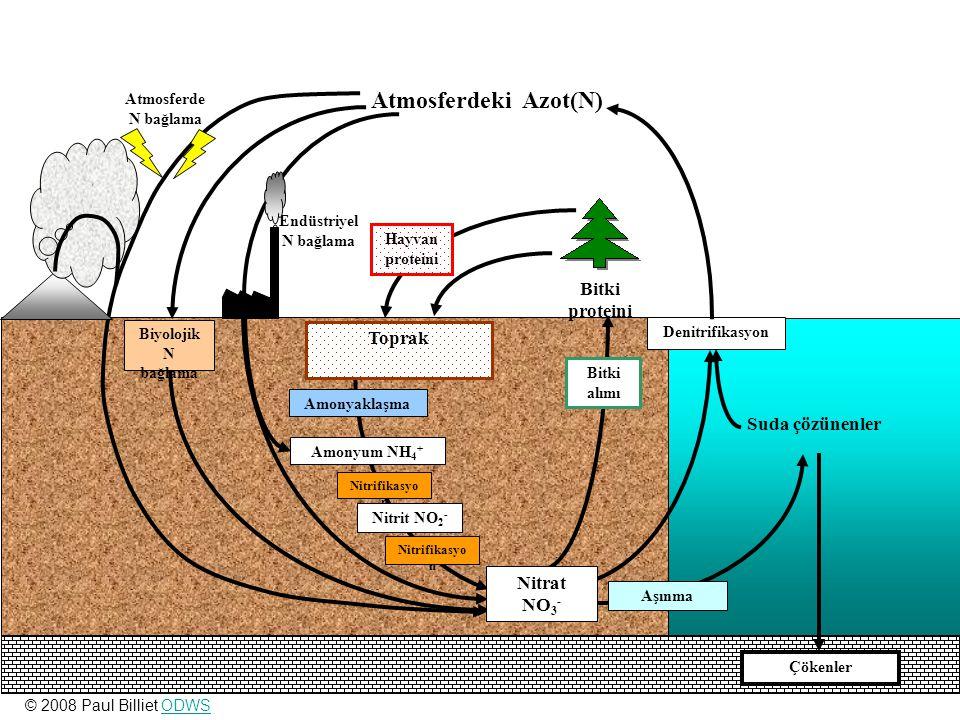 Atmosferdeki Azot(N) Bitki proteini Toprak Suda çözünenler Nitrat NO3-