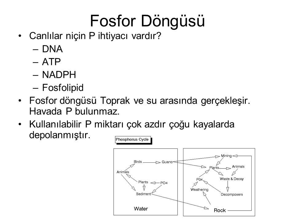 Fosfor Döngüsü Canlılar niçin P ihtiyacı vardır DNA ATP NADPH