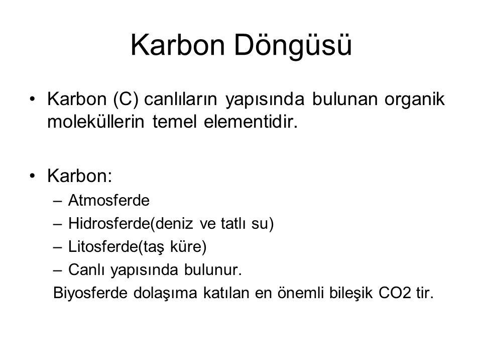 Karbon Döngüsü Karbon (C) canlıların yapısında bulunan organik moleküllerin temel elementidir. Karbon: