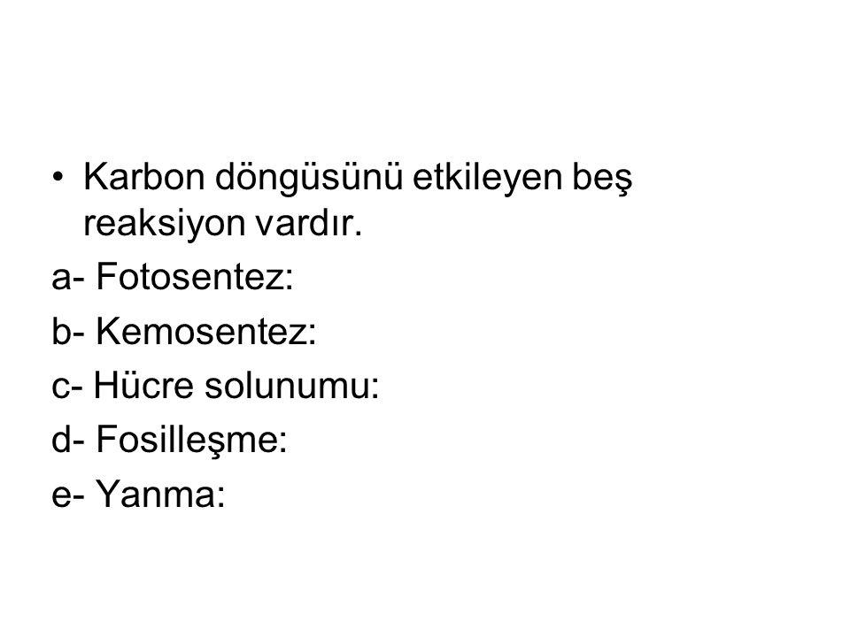 Karbon döngüsünü etkileyen beş reaksiyon vardır.