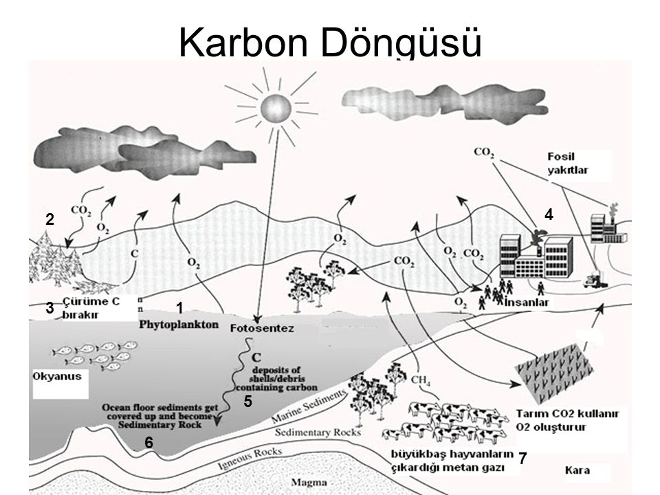 Karbon Döngüsü 4 2 3 1 5 6 7