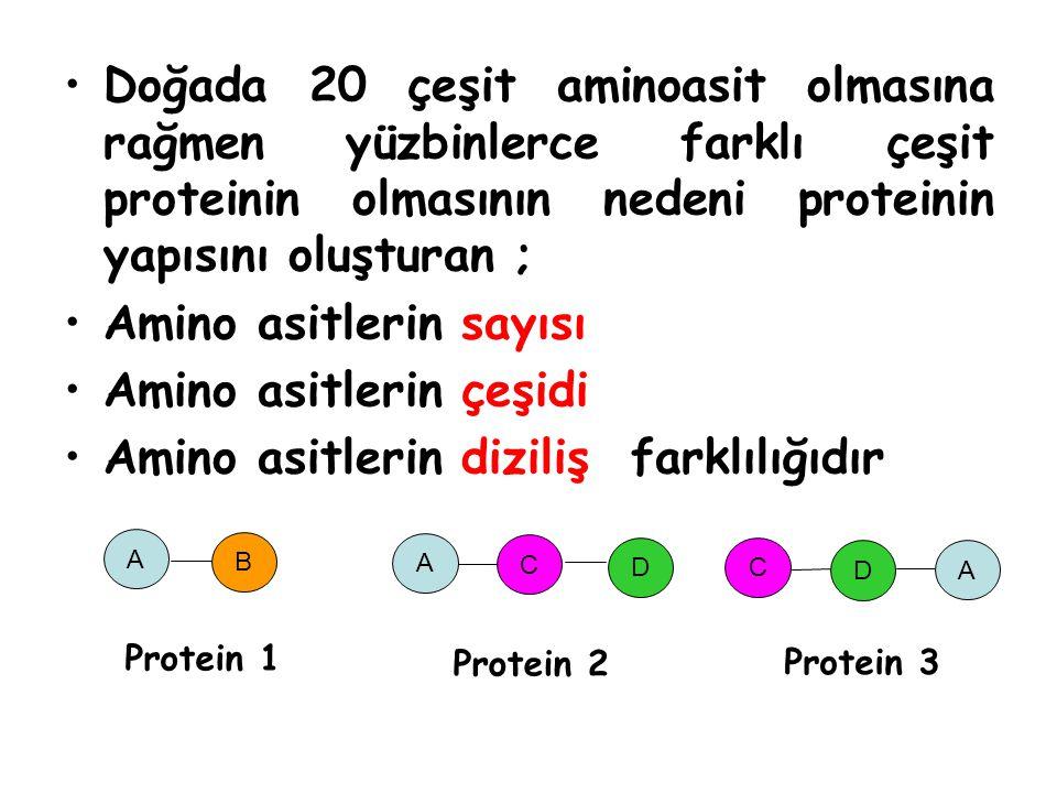 Amino asitlerin sayısı Amino asitlerin çeşidi