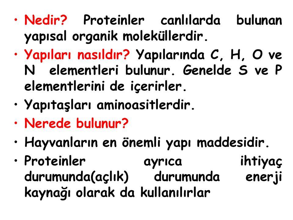 Nedir Proteinler canlılarda bulunan yapısal organik moleküllerdir.