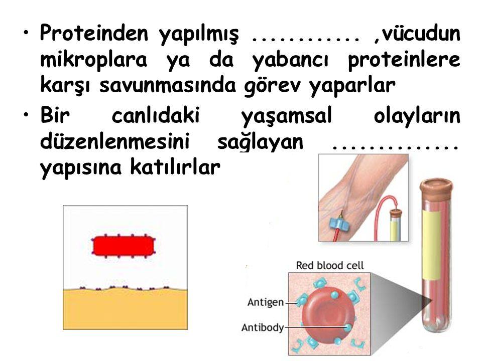 Proteinden yapılmış ............ ,vücudun mikroplara ya da yabancı proteinlere karşı savunmasında görev yaparlar