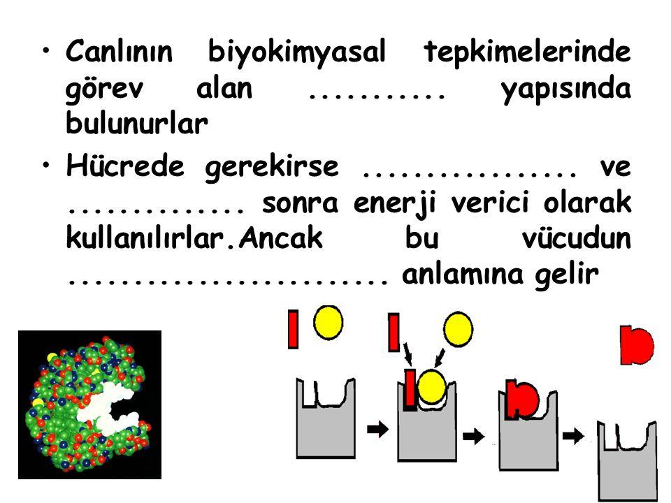 Canlının biyokimyasal tepkimelerinde görev alan ........... yapısında bulunurlar
