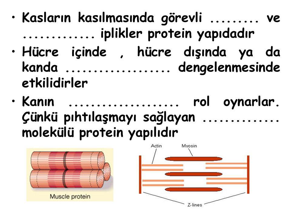 Kasların kasılmasında görevli ......... ve ............. iplikler protein yapıdadır