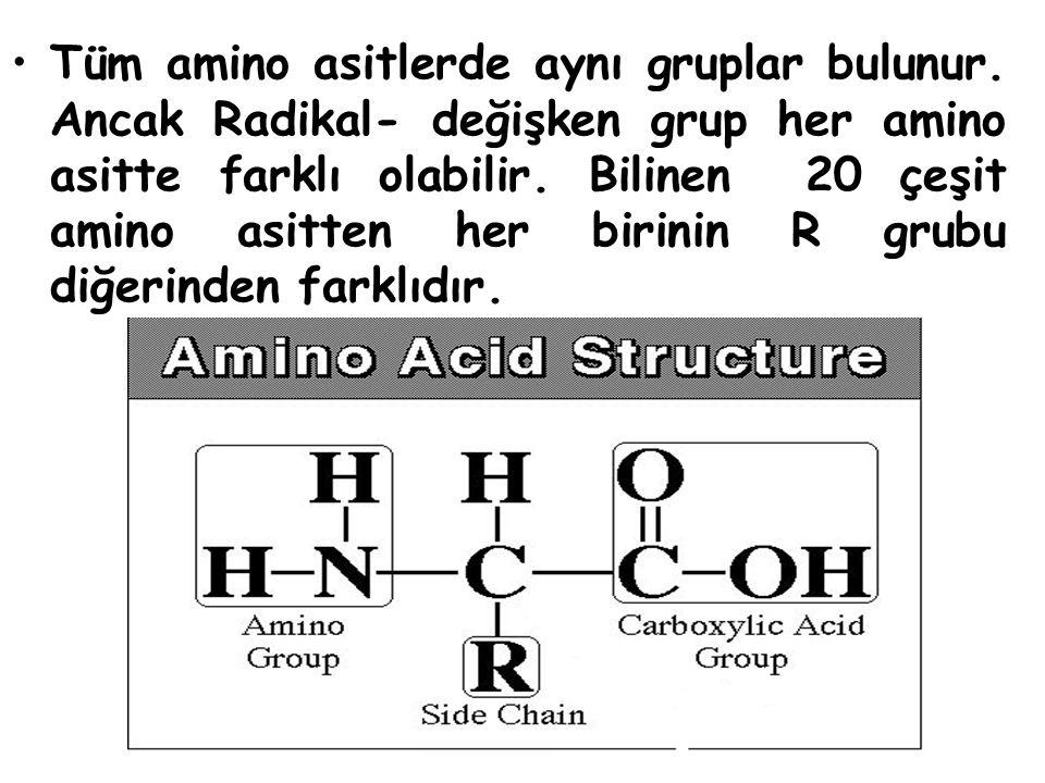 Tüm amino asitlerde aynı gruplar bulunur