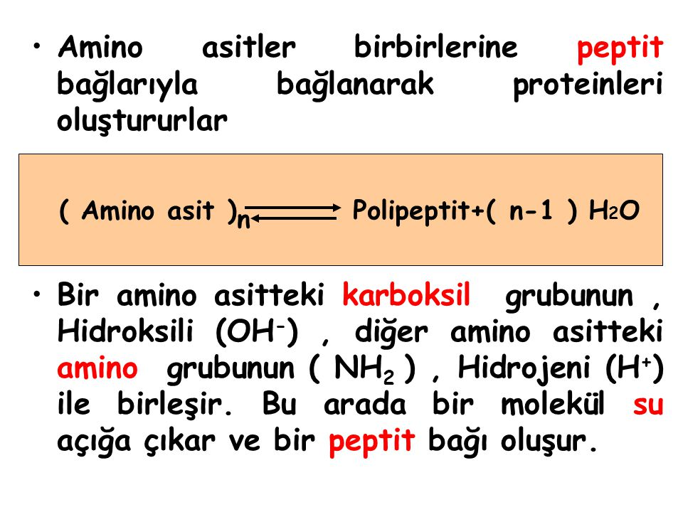 ( Amino asit )n Polipeptit+( n-1 ) H2O