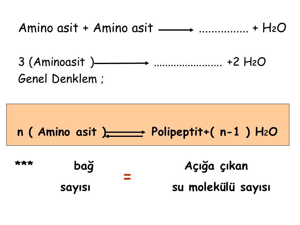 n ( Amino asit ) Polipeptit+( n-1 ) H2O