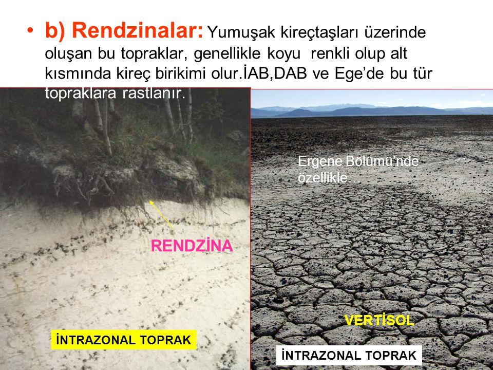 b) Rendzinalar: Yumuşak kireçtaşları üzerinde oluşan bu topraklar, genellikle koyu renkli olup alt kısmında kireç birikimi olur.İAB,DAB ve Ege'de bu tür topraklara rastlanır.