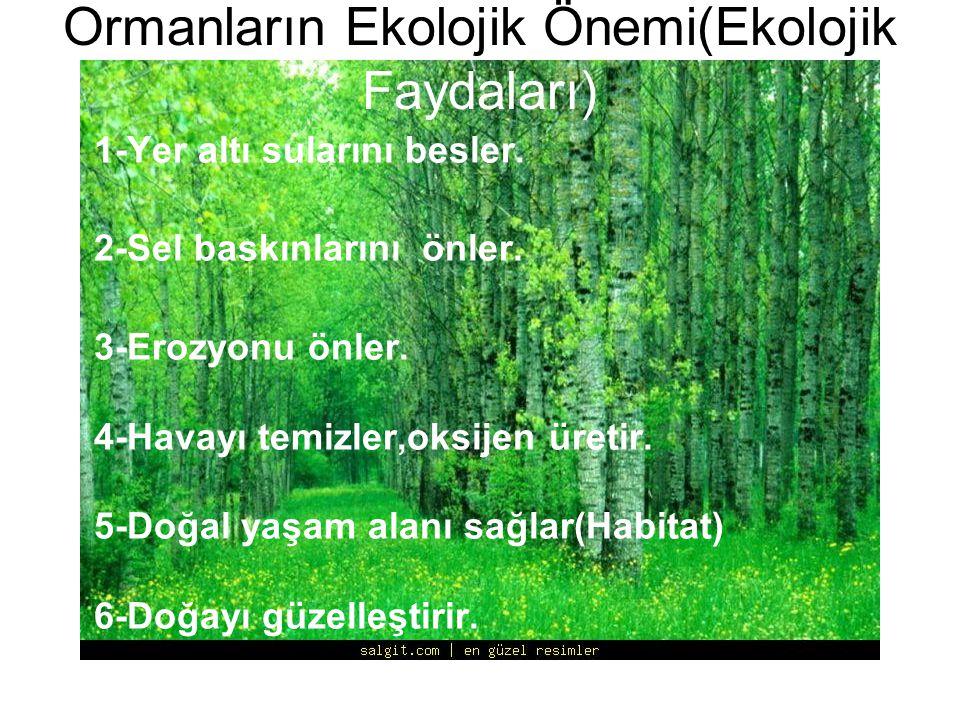 Ormanların Ekolojik Önemi(Ekolojik Faydaları)