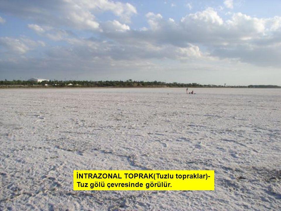 İNTRAZONAL TOPRAK(Tuzlu topraklar)-