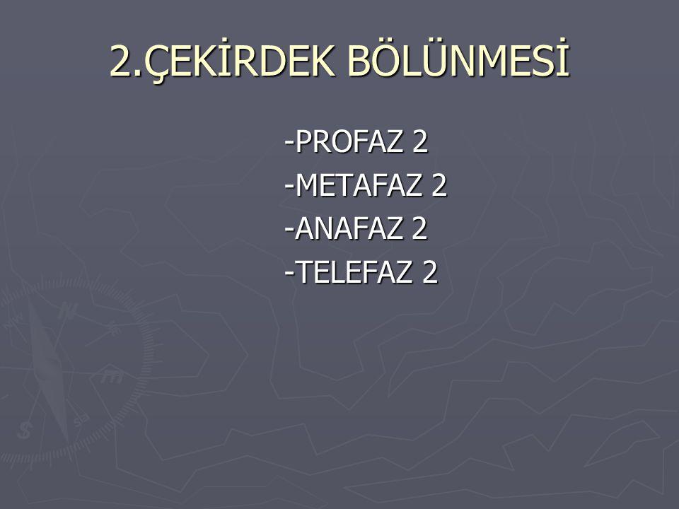 2.ÇEKİRDEK BÖLÜNMESİ -PROFAZ 2 -METAFAZ 2 -ANAFAZ 2 -TELEFAZ 2