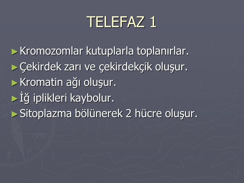 TELEFAZ 1 Kromozomlar kutuplarla toplanırlar.