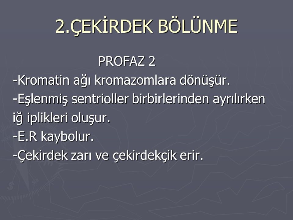 2.ÇEKİRDEK BÖLÜNME PROFAZ 2 -Kromatin ağı kromazomlara dönüşür.