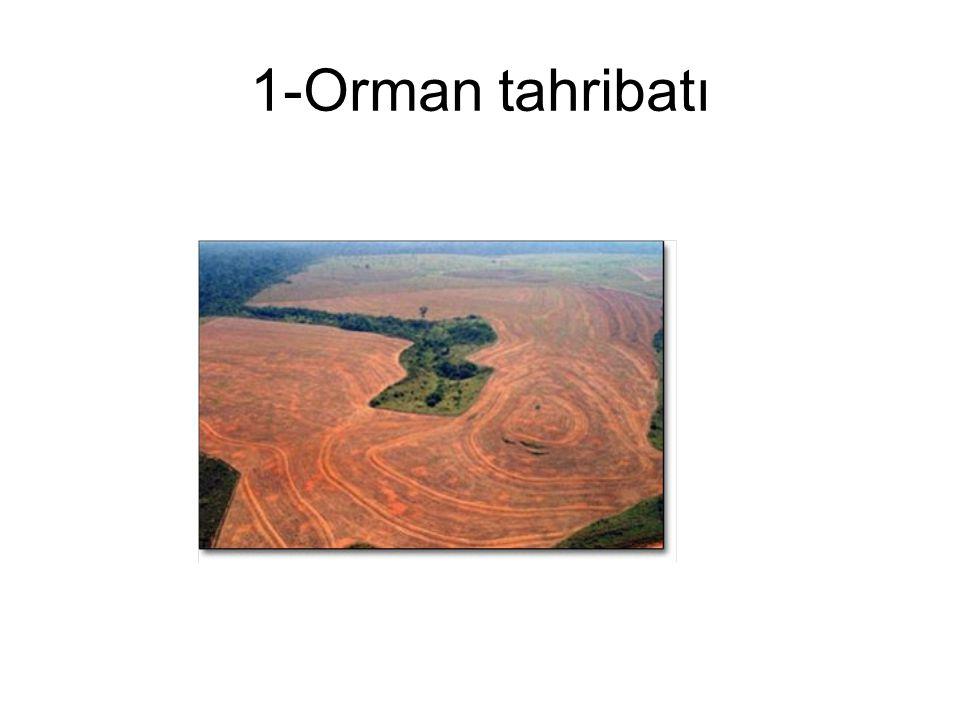 1-Orman tahribatı