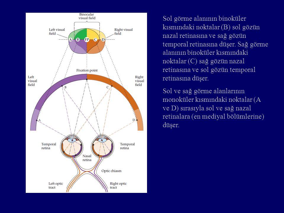 Sol görme alanının binoküler kısmındaki noktalar (B) sol gözün nazal retinasına ve sağ gözün temporal retinasına düşer. Sağ görme alanının binoküler kısmındaki noktalar (C) sağ gözün nazal retinasına ve sol gözün temporal retinasına düşer.